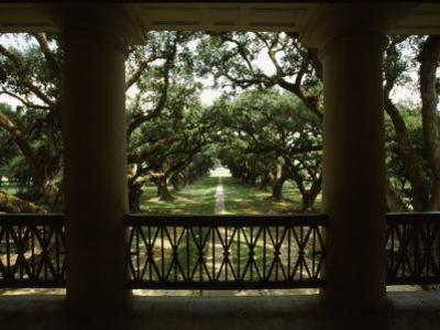 Oak Trees in Front of a Mansion, Oak Alley Plantation, Vacherie, Louisiana, USA