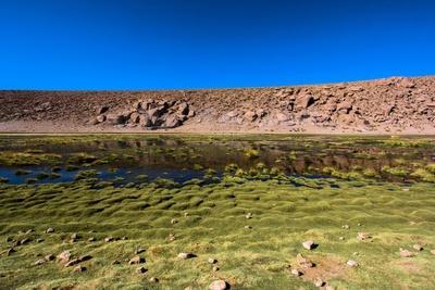 https://imgc.allpostersimages.com/img/posters/oasis-in-the-atacama-desert-chile-and-bolivia_u-L-Q10VFMT0.jpg?p=0