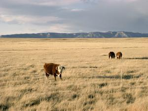 The Great Plains, New Mexico, USA by Occidor Ltd
