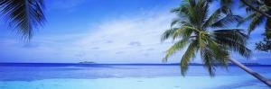 Ocean, Island, Water, Palm Trees, Maldives