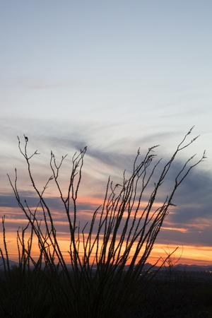 https://imgc.allpostersimages.com/img/posters/ocotillo-and-mountains-at-sunset-saguaro-national-park-arizona-usa_u-L-PN6NA20.jpg?p=0