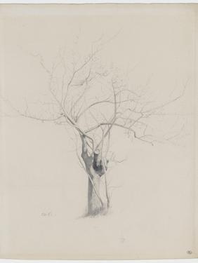 L'Arbre nu by Odilon Redon