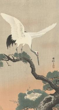 Japanese Crane on Pine Branch, 1900-30 by Ohara Koson