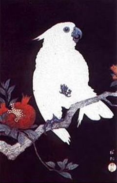 Ukiyo-e Parrot by Ohara Shoson