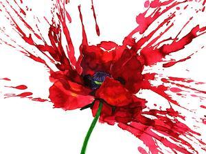 Poppy Flower by okalinichenko