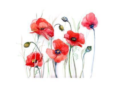 Poppy by okalinichenko