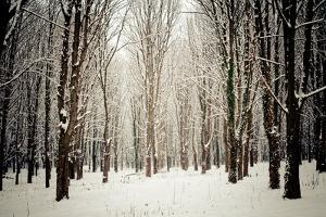 Winter Forest by oksix