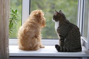 Cat and Dog on the Window by Okssi