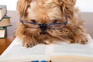 Serious Dog In Glasses by Okssi