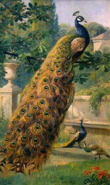 Peacocks in the Park, 1886 by Olaf August Hermansen