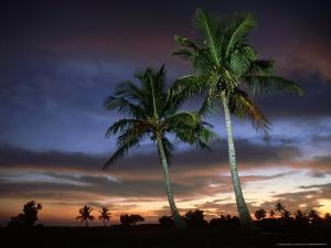 Coconut Palm, Florida, USA by Olaf Broders