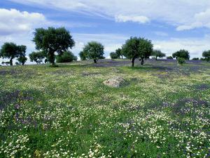 Flower Meadow with Oak Trees, Spain by Olaf Broders