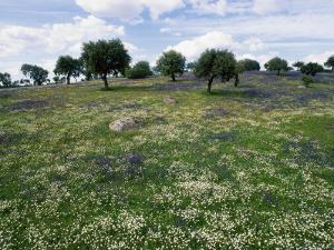 Flowering Meadow with Quercus Ilex, Extremadura, Spain by Olaf Broders
