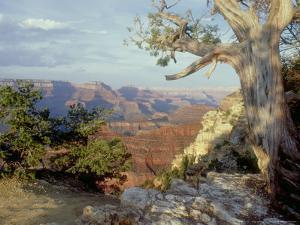 Grand Canyon National Park, Arizona, USA by Olaf Broders