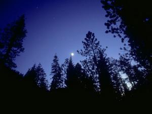 Moon with Trees, Sierra Nevada, USA by Olaf Broders