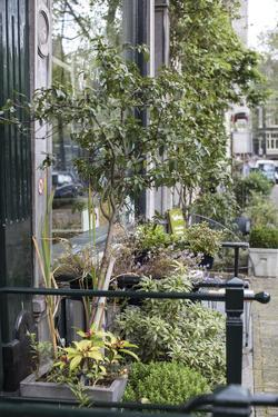 The Netherlands, Holland, Amsterdam, street, front garden by olbor