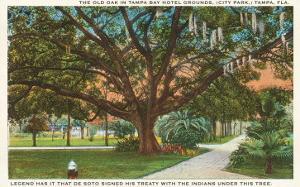 Old Oak, Tampa, Florida