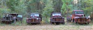 Old Rusty Cars and Trucks on Route 319, Crawfordville, Wakulla County, Florida, USA