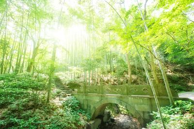 https://imgc.allpostersimages.com/img/posters/old-stone-bridge-and-lush-foliage-in-the-yun-qi-bamboo-forest-zhejiang-china_u-L-PWFEAJ0.jpg?p=0