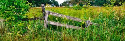 Old wooden fence and Goldenrod in a field, Kane County, Illinois, USA
