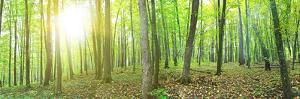 Panorama of a Green Summer Forest by Olegkalina