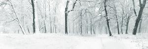 Panorama of Winter Forest with Trees Covered Snow by Olegkalina
