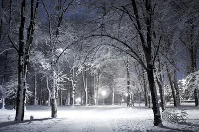 Winter Park in the Evening Covered with Snow with a Row of Lamps by Olegkalina