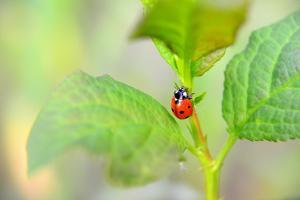 Ladybug Crawling Up the Plant by Oleksandr Zheltobriukh