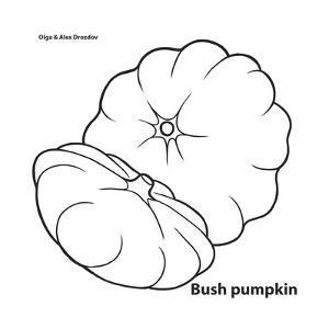 Bush Pumpkin by Olga And Alexey Drozdov