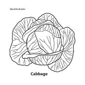 Cabbage by Olga And Alexey Drozdov