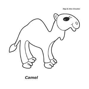 Camel by Olga And Alexey Drozdov