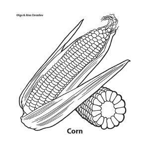Corn by Olga And Alexey Drozdov
