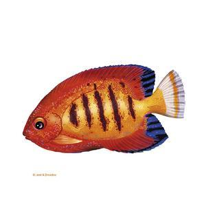 Fish 2 Red-Yellow by Olga And Alexey Drozdov