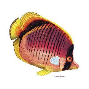 New Fish 1 by Olga And Alexey Drozdov