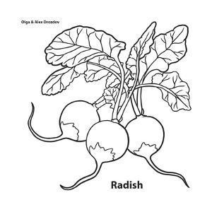 Radish by Olga And Alexey Drozdov