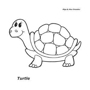 Turtle by Olga And Alexey Drozdov