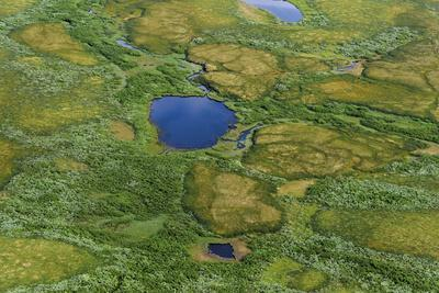 Aerial view of Pechora River Delta, Nenets Autonomous Okrug, Arctic, Russia, July 2017