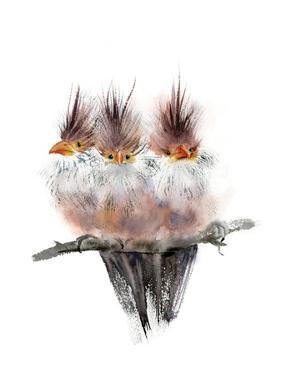 Three Amigos II by Olga Shefranov