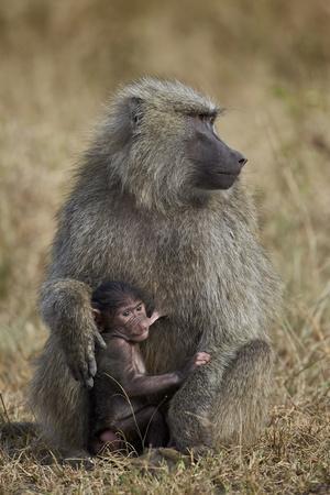 https://imgc.allpostersimages.com/img/posters/olive-baboon-papio-cynocephalus-anubis-nursing_u-L-PNFYIP0.jpg?artPerspective=n