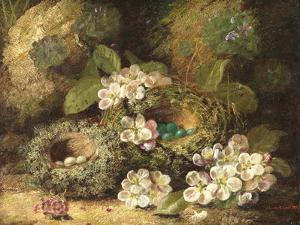 Primroses and Bird's Nests on a Mossy Bank, 1882 by Oliver Clare
