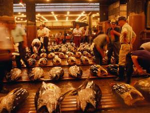 Rows of Giant Tuna for Sale at Tsukiji Central Fish Market, Tokyo, Japan by Oliver Strewe