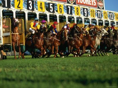 Start of Horse Race, Sydney, New South Wales, Australia by Oliver Strewe