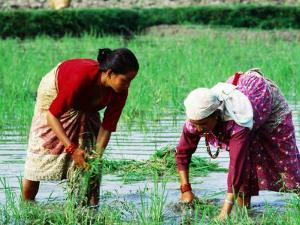 Two Newari Women Planting Rice in Paddy, Kathmandu, Bagmati, Nepal by Oliver Strewe