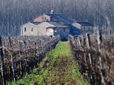 Winery Vines and Buildng, Torgiano, Umbria, Italy by Oliver Strewe