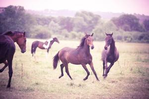 Horses Trotting and Playing in Field by Olivia Bell Photography
