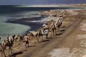 Salt Caravan in Djibouti, Going from Assal Lake to Ethiopian Mountains, Djibouti, Africa by Olivier Goujon