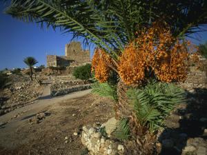 Byblos, Lebanon, Middle East by Olivieri Oliviero