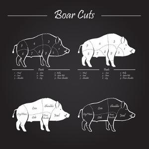 Boar Meat Cut Diagram - Elements Blackboard by ONiONAstudio