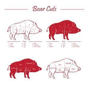 Boar Meat Cut Diagram - Elements Red on White by ONiONAstudio