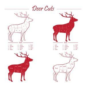 Deer Meat Cut Scheme by ONiONAstudio